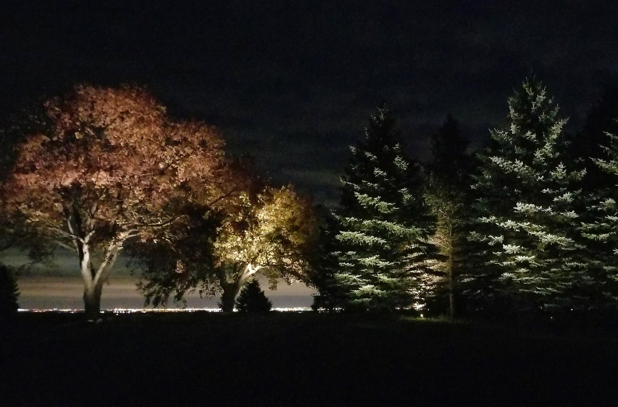 Big tree up lighting led in Caledon Ontario