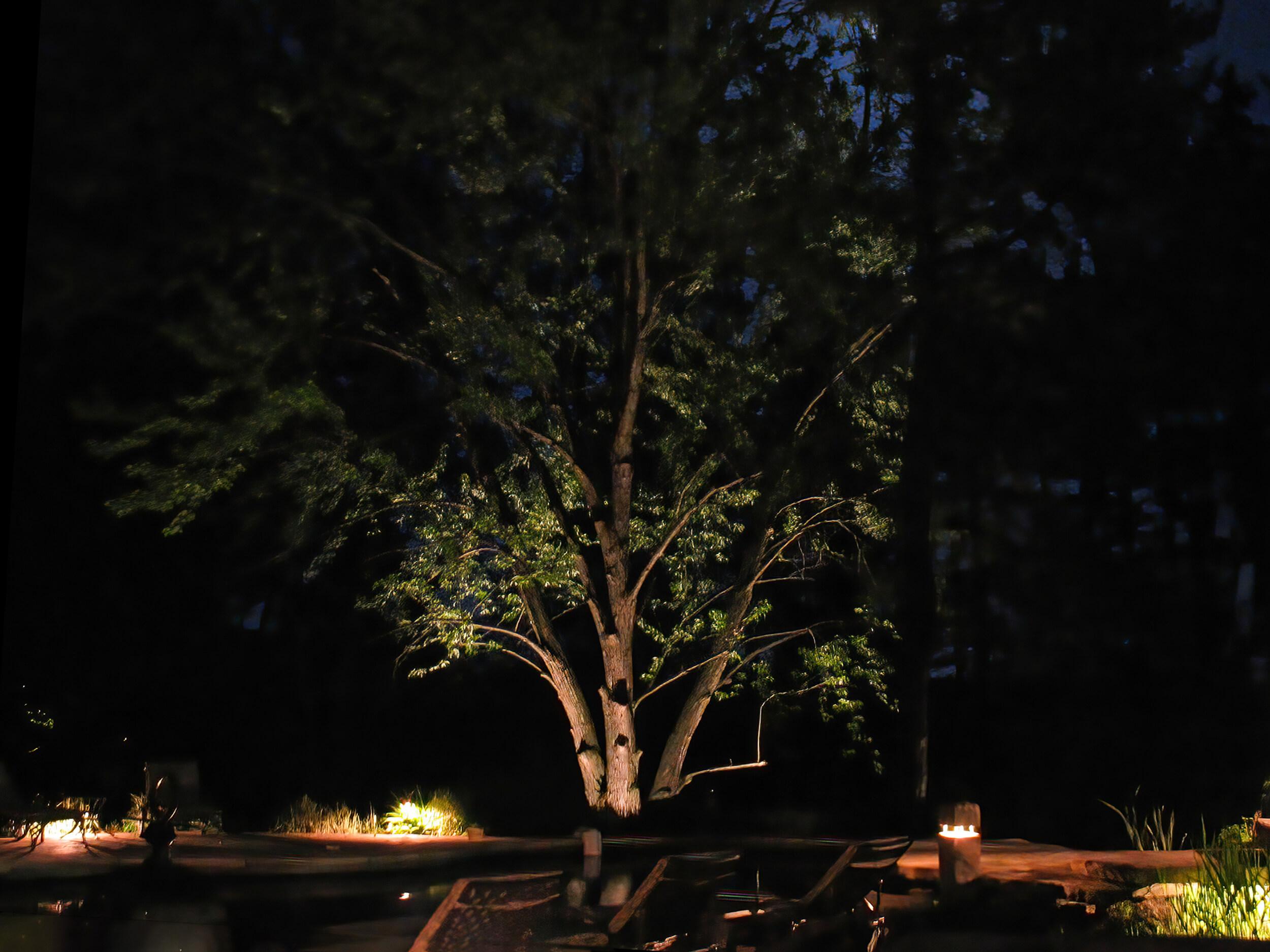 Poolside tree uplighting led in Kitchener - Blair
